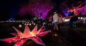 Festival-of-Arts-2016-2